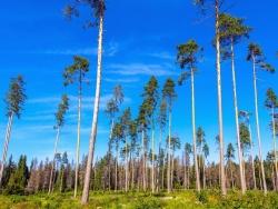 Звенигородский лес